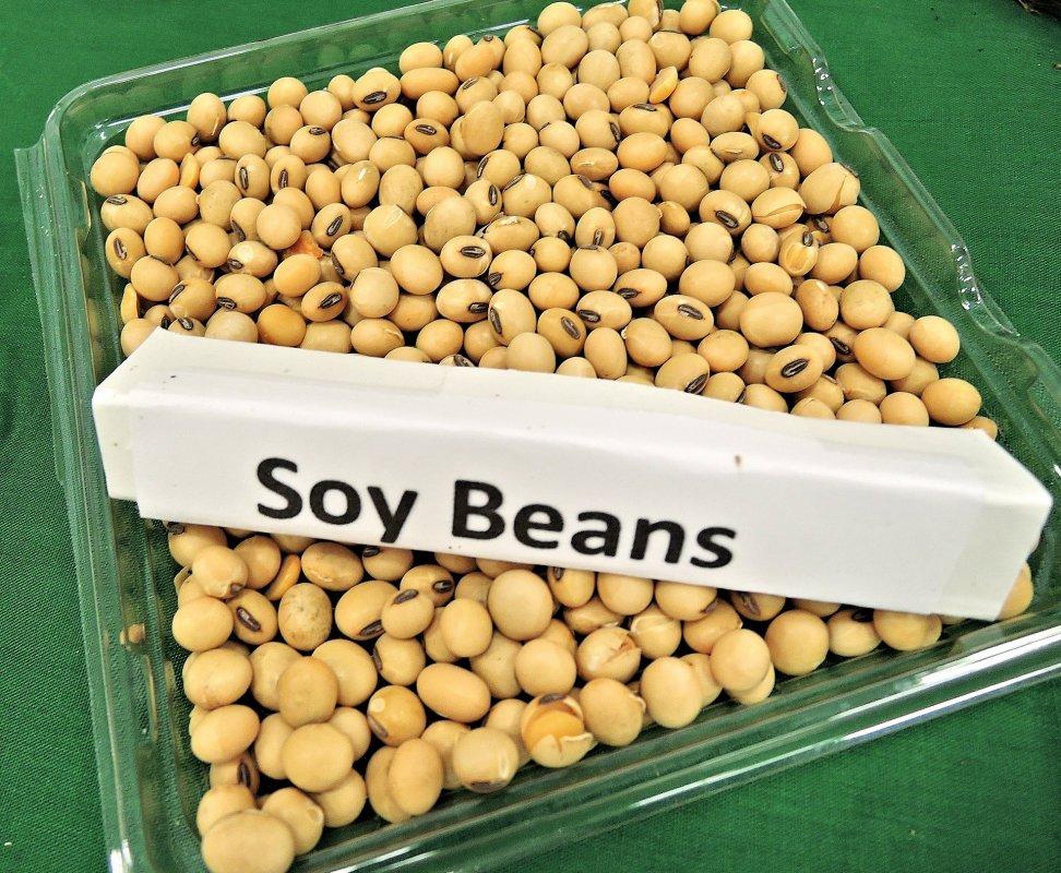 kaufen Soybeans Non-GMO