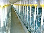 Einzeltierfütterung und Automatenbeschickungen