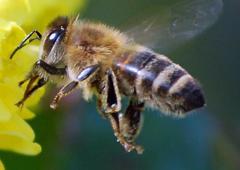 Natürlicher Honig aus Deutschland