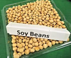 Soybeans Non-GMO
