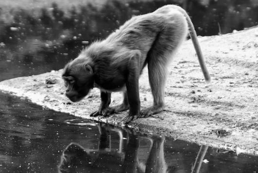 Auftrag Tierfotografie