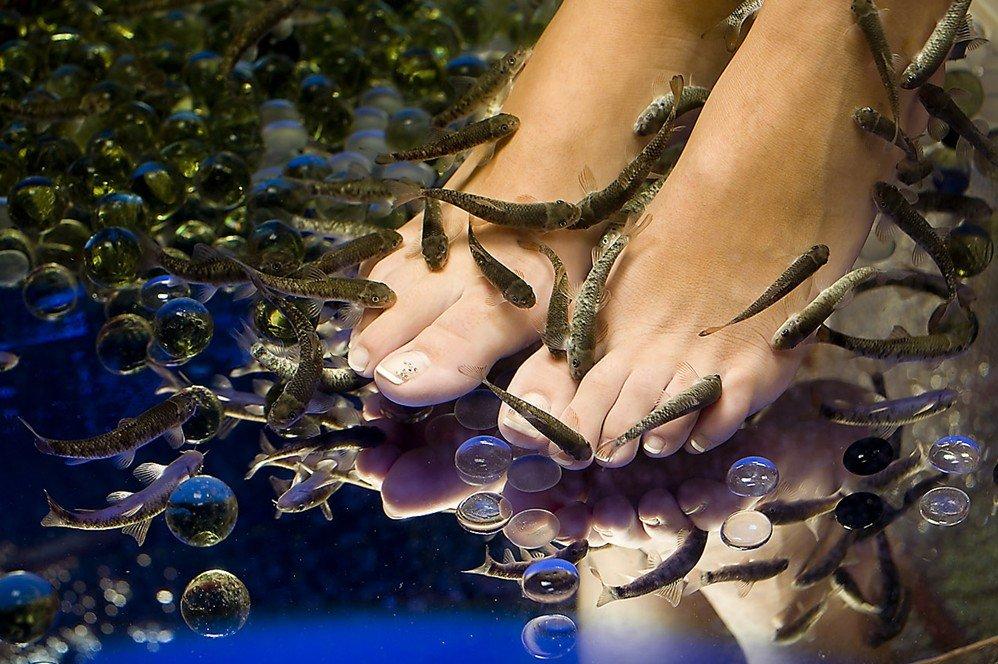 Auftrag Fisch SPA Behandlungen